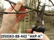 обрезка сада,  обрезка яблонь обрезка сада Киев